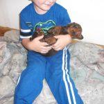new doberman puppy